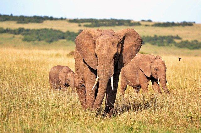 Wycieczki do Afryki, a RODO